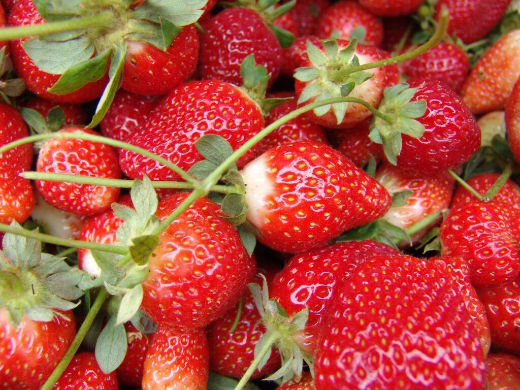 赤色の食べ物|イタリア語13語一覧