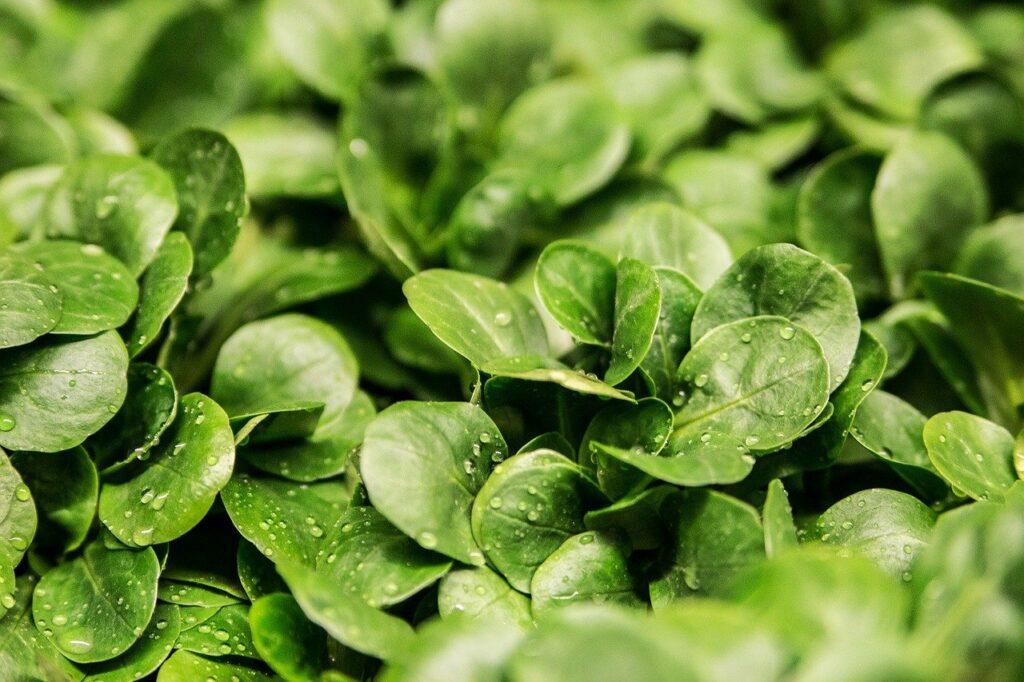 緑色・青色・紫色の食べ物|イタリア語8語一覧